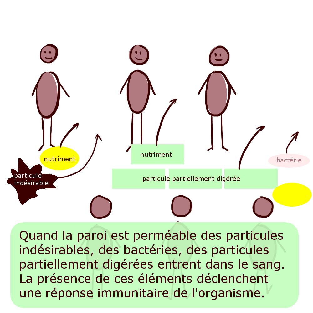 Quand la paroi est perméable des particules indésirables, des bactéries, des particules partiellement digérées entrent dans le sang. La présence de ces éléments déclenchent une réponse immunitaire de l'organisme.